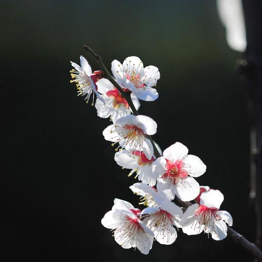 鲜花 盛开 植物 花朵 花瓣