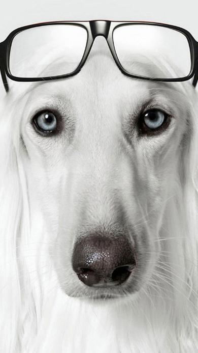狗狗 动物 可爱 眼镜