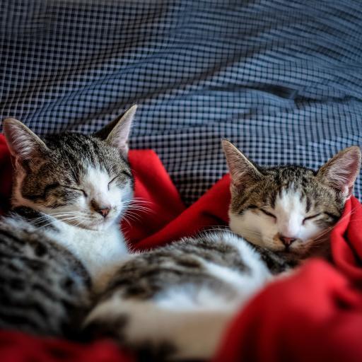 喵星人 睡觉 可爱