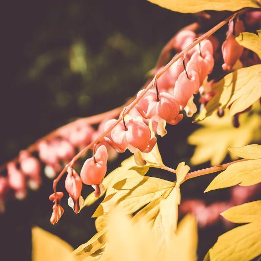 鲜花 树叶 枝头 光鲜