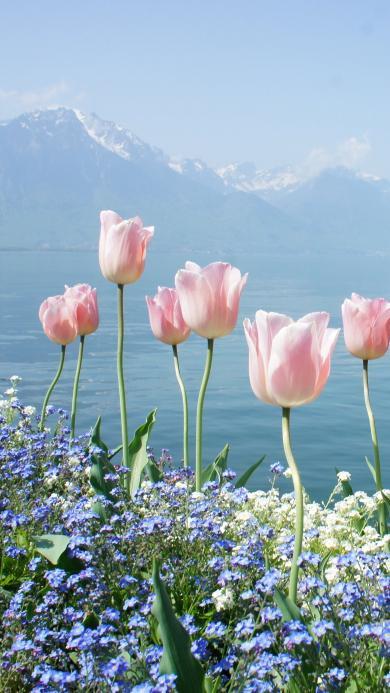 郁金香 鲜花 花丛 盛开 山
