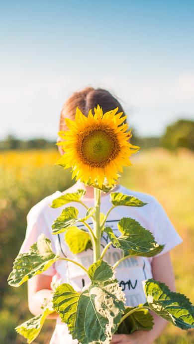 向日葵 女孩 黄色 田野 鲜花 盛开
