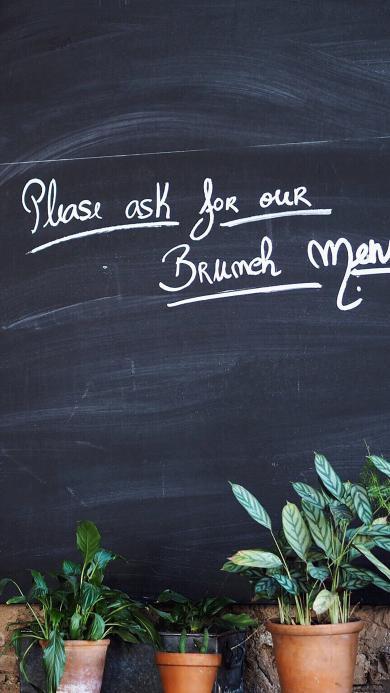 黑板 绘字 植物 盆栽