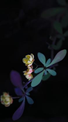 小花 植物 枝叶 盛开