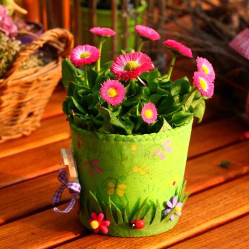 创意盆栽 粉色小雏菊