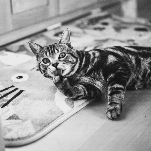 猫咪 动物 可爱 地毯
