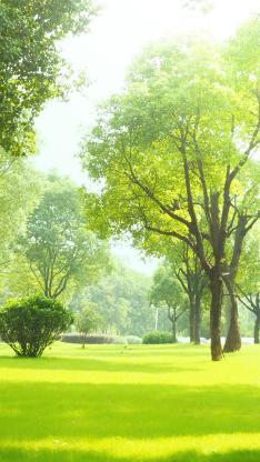 春意 树木 草地 绿化