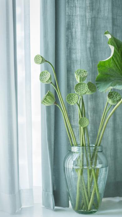 莲蓬 插花 荷叶 水培 玻璃瓶 盆栽