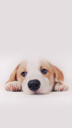 小狗狗 犬 可爱 萌宠 汪星人