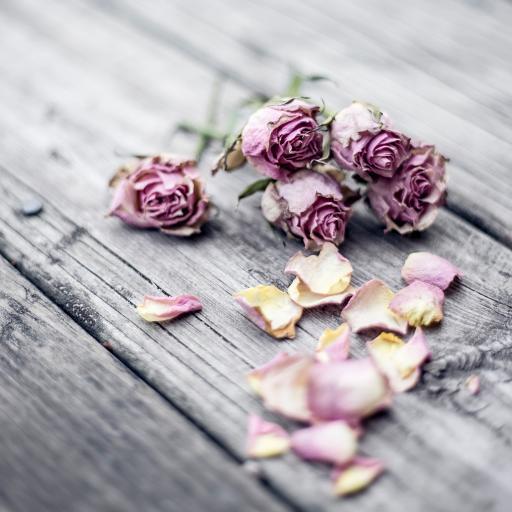 鲜花 干枯 枯萎 花瓣