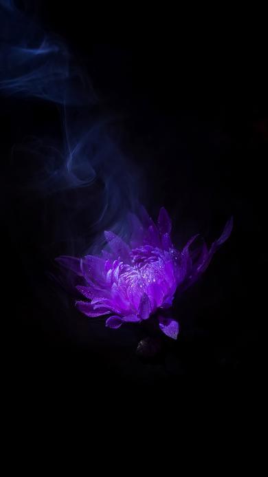 鲜花 菊花 紫色 烟雾 盛开 花瓣