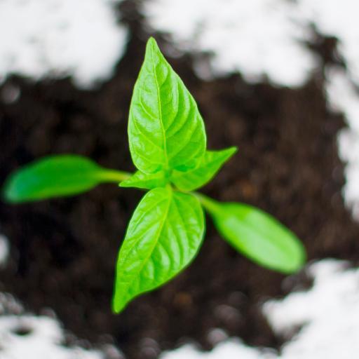 植物 绿叶 发芽 枝芽