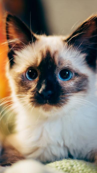 可爱 猫咪 动物 宠物