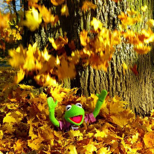 青蛙玩偶 黄色枫叶 撒欢