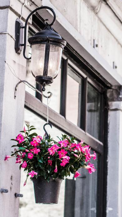 路灯 街边 悬挂 盆栽 鲜花