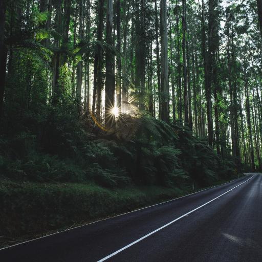公路 树林 林荫道 道路 阳光