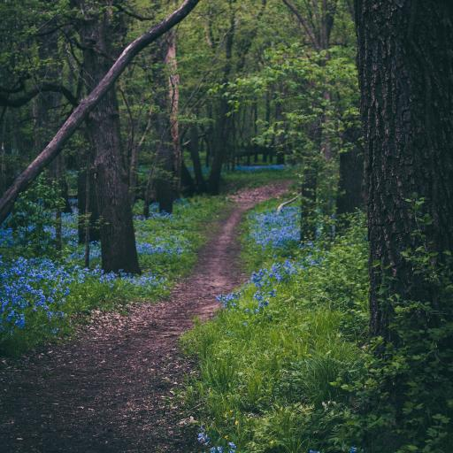 森林 树木 小道 茂密