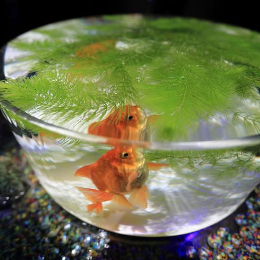 鱼缸 饲养小金鱼 水草