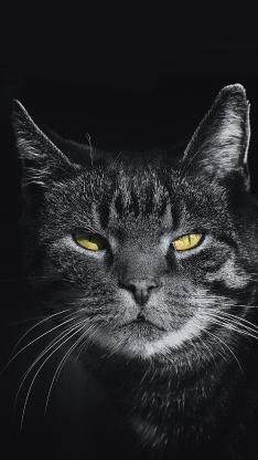 猫咪 动物 灰猫 眯眼