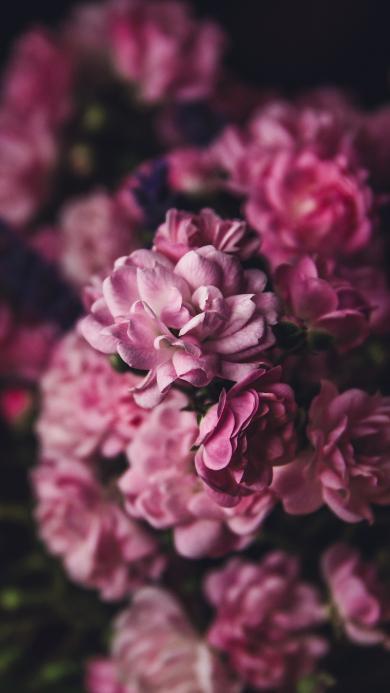 鲜花 花瓣 盛开 粉色