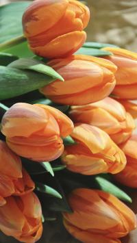 郁金香 鲜花 花束 枝叶 橘色