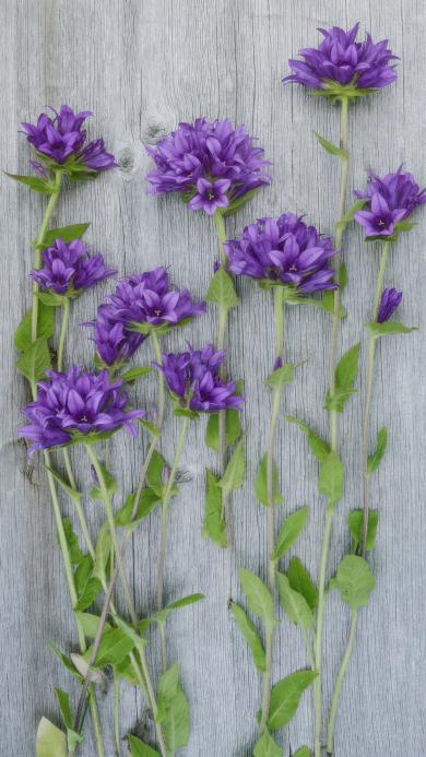 鲜花 紫色 木板 新鲜 自然 植物