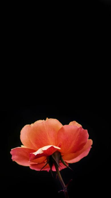 鲜花 植物 花瓣 色彩 特写