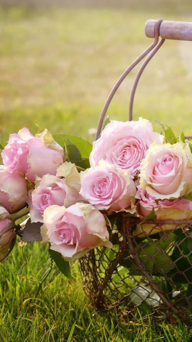 花篮子 玫瑰花 粉色 草地 阳光