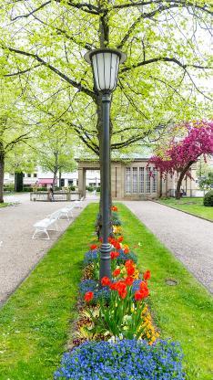 风景 路灯 公园 树木 花草