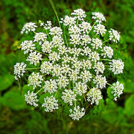 鲜花 白色 小花朵凑成 纯洁