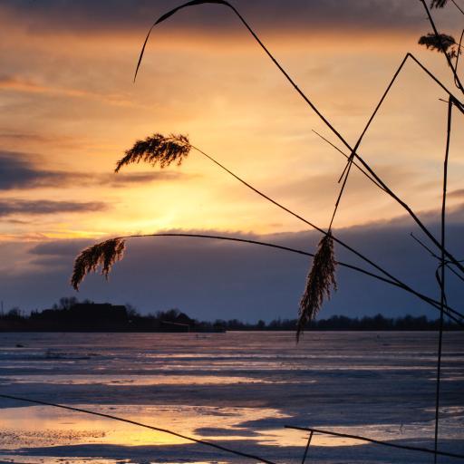 海边 夕阳美景 芦苇