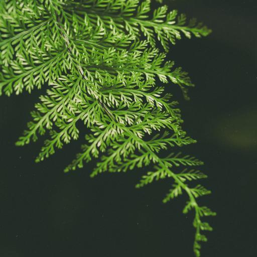绿叶 植物 松针 特写