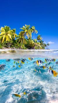 海边风景 岛屿 椰树 海鱼