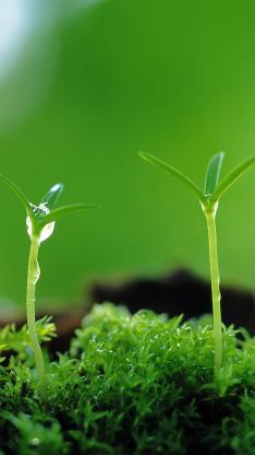 发芽 植物 花盆 生命