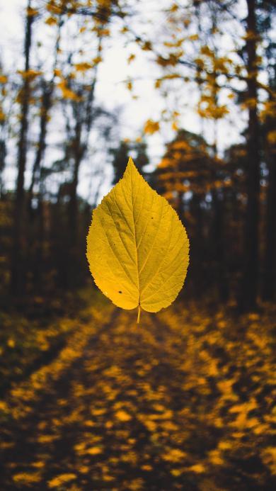 落叶 枯黄 秋天 叶子 季节