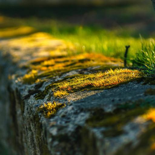 苔藓 植物 石头 阳光