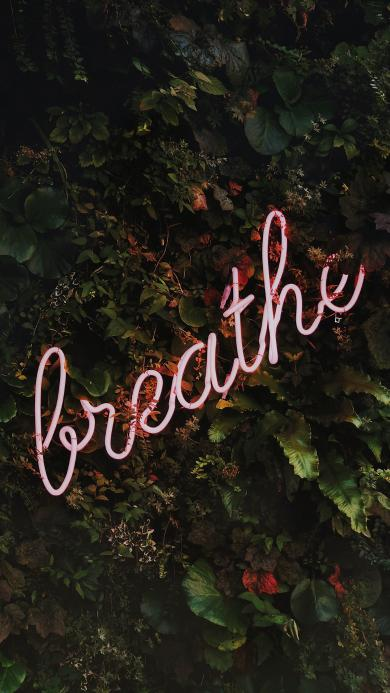 breathe 呼吸 绿叶 灯光 英文