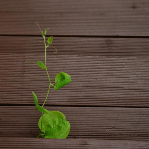 枝芽 植物 绿叶 生命力