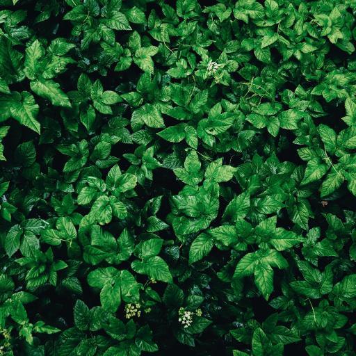 绿叶 密集 护眼  植物