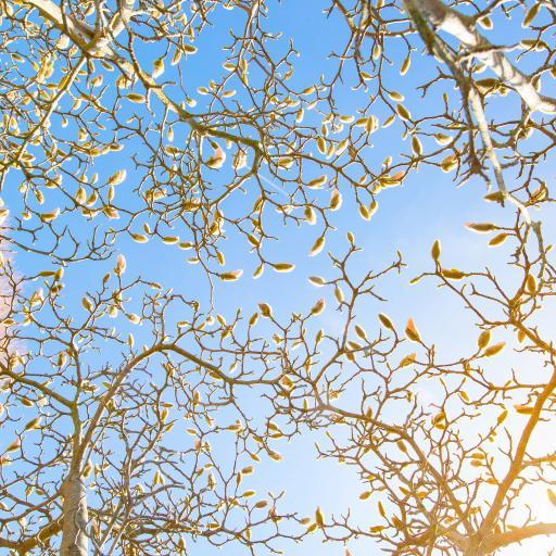 蓝天 树木枝丫 自然美景
