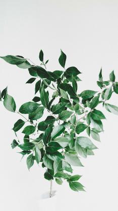 枝叶 绿叶 插花 叶子 小清新