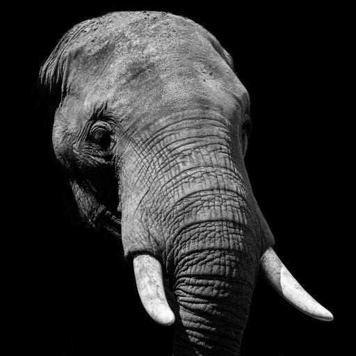 大象 泰国国宝 黑白 象牙
