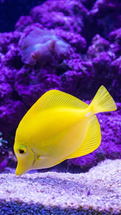 鱼缸 观赏鱼 黄 色彩 艳丽