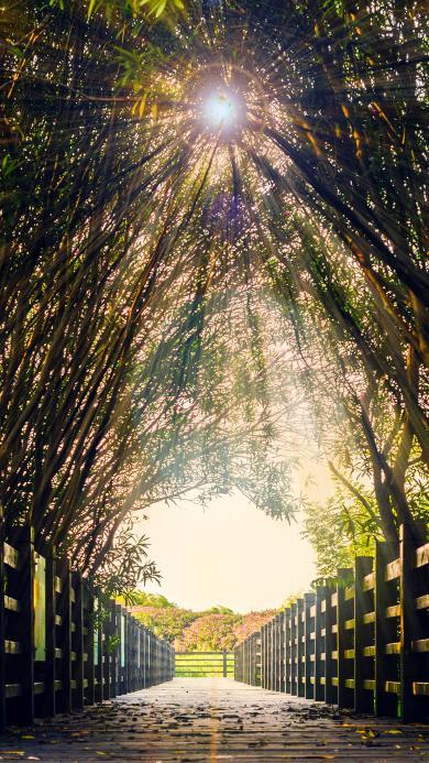 公园 阳光 林荫道 栅栏