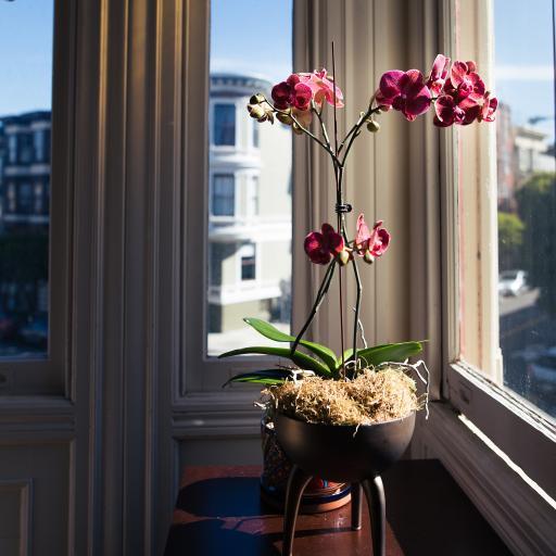 鲜花 花瓶 窗台 色彩 家居