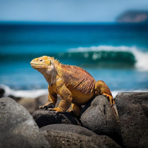 蜥蜴 石头 爬行 户外 阳光