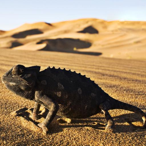 沙漠 蜥蜴 阳光 干涸