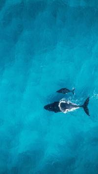 天蓝色大海 大鲸鱼 航拍