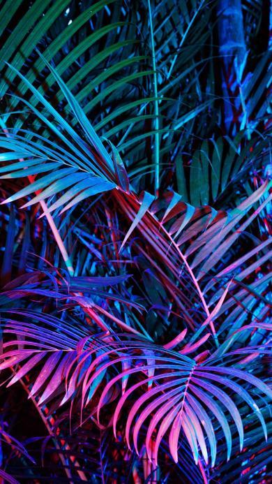 绿植 大绿叶 紫色灯光