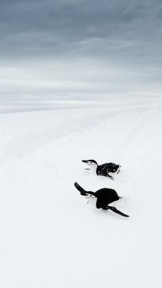 企鹅 南极 雪地 白色 可爱 萌